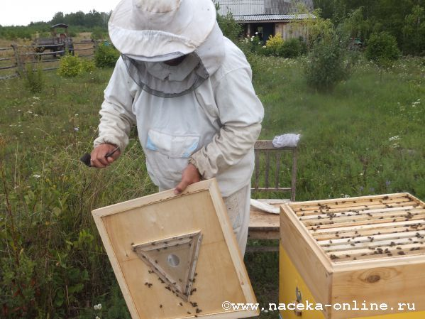 Удалитель для пчел своими руками 676